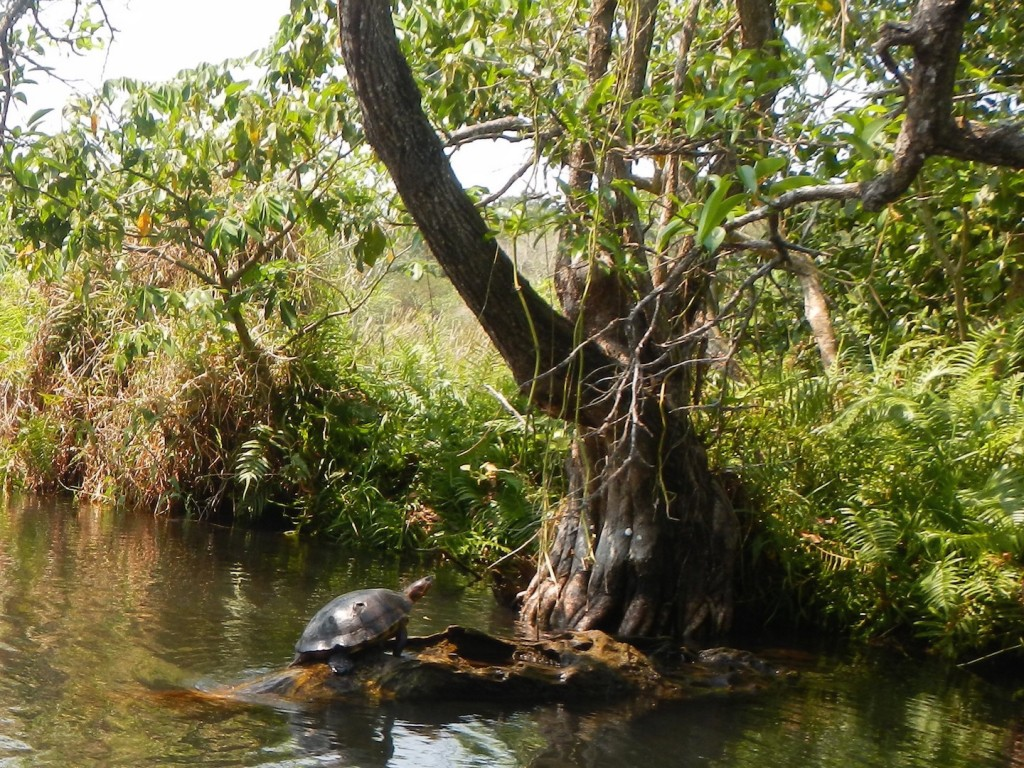During the panga ride we saw many turtles and birds
