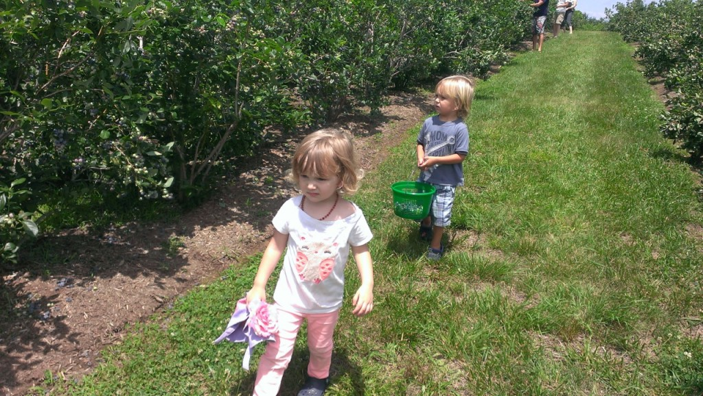 The kids weren't very interested in picking berries but had fun tasting