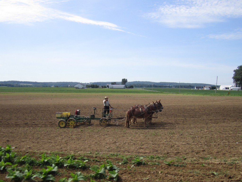 An Amish man was out working his field while we rode the short train ride
