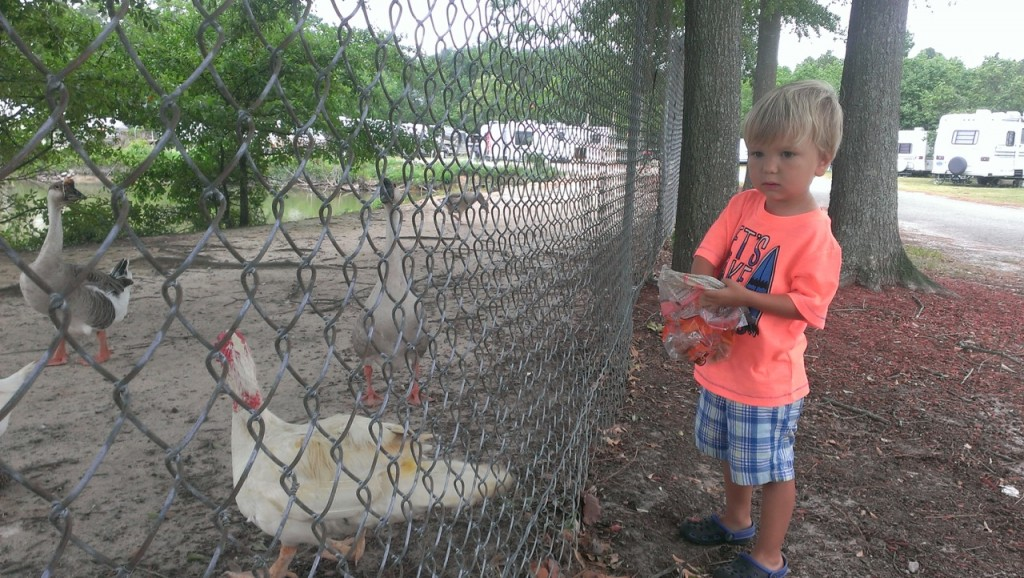 Sully fed the animals at the Barnyard RV Park