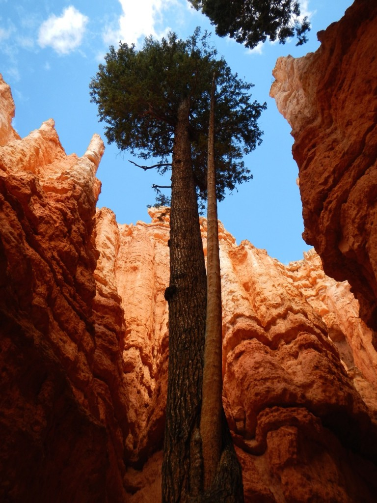 At the bottom of the switchback trail there were big straight trees reaching towards the sunlight above